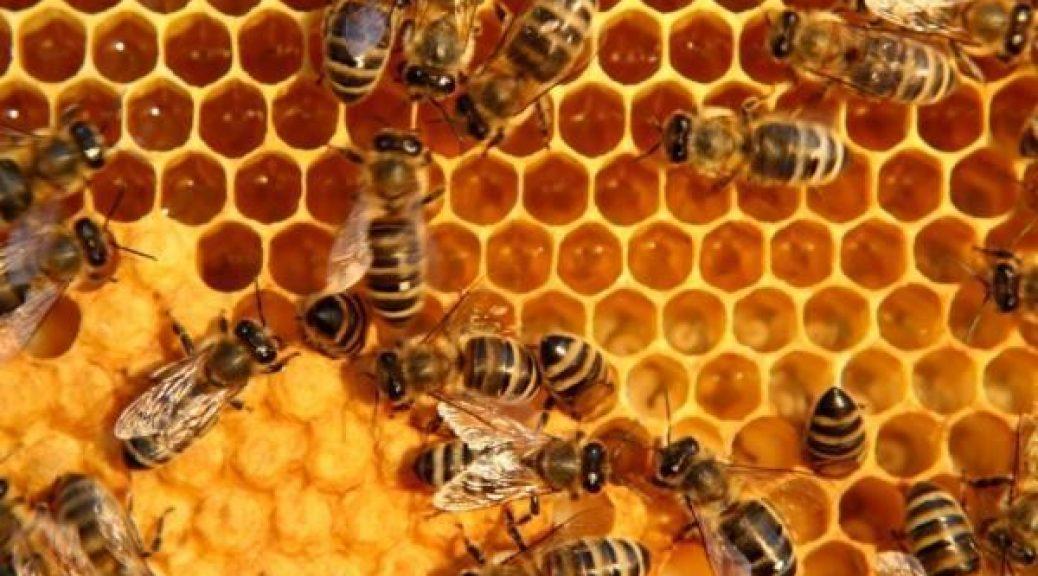 https://blog.beeing.gr/wp-content/uploads/2017/04/bees1-1038x576.jpg