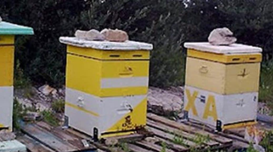 κλοπή μελισσών εύβοια beeing.gr